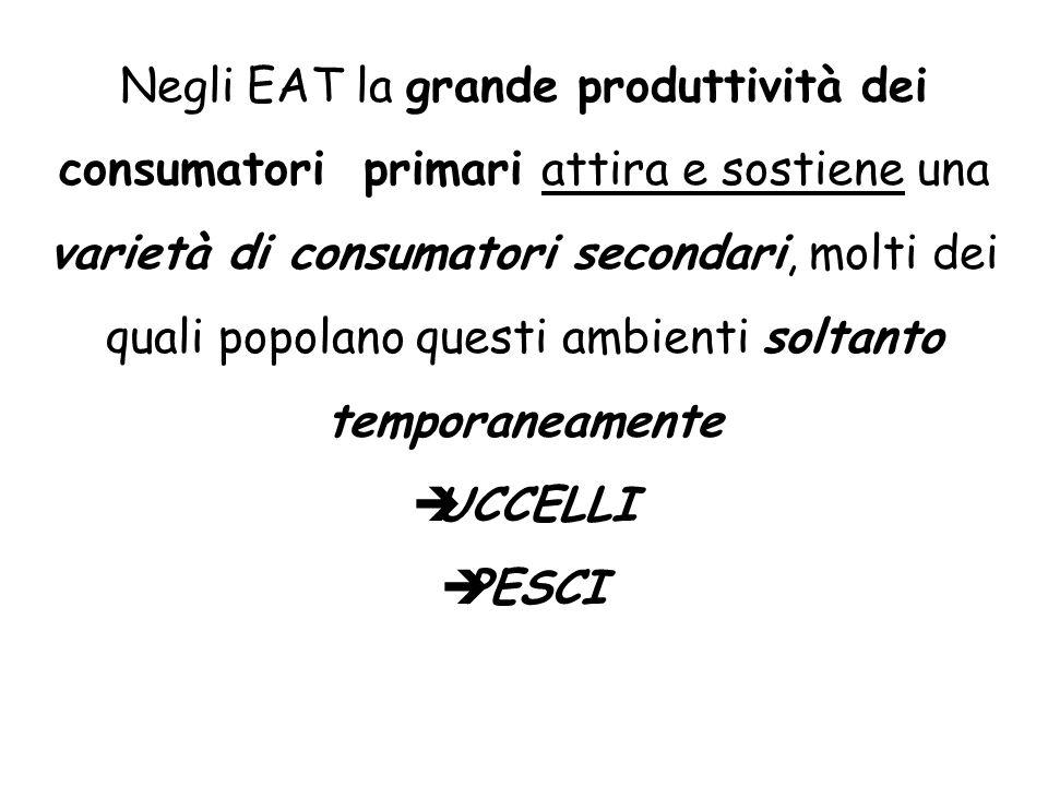 Negli EAT la grande produttività dei consumatori primari attira e sostiene una varietà di consumatori secondari, molti dei quali popolano questi ambie