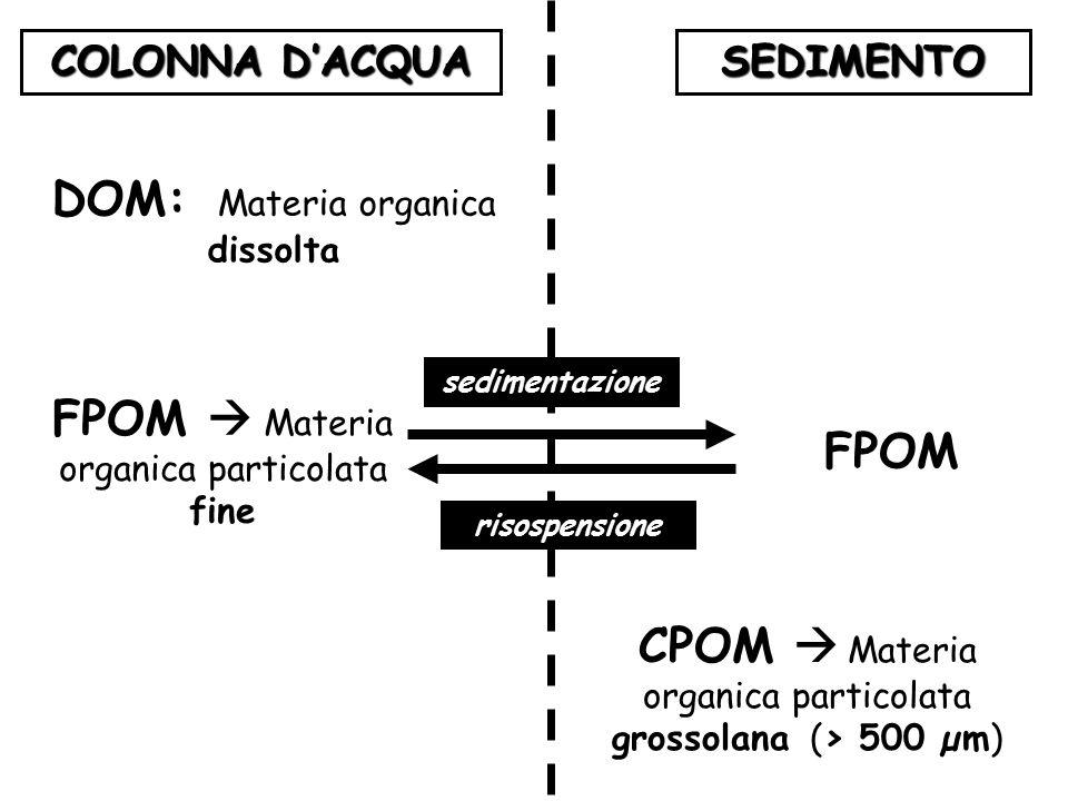COLONNA D'ACQUA SEDIMENTO DOM: Materia organica dissolta FPOM  Materia organica particolata fine FPOM sedimentazione risospensione CPOM  Materia org