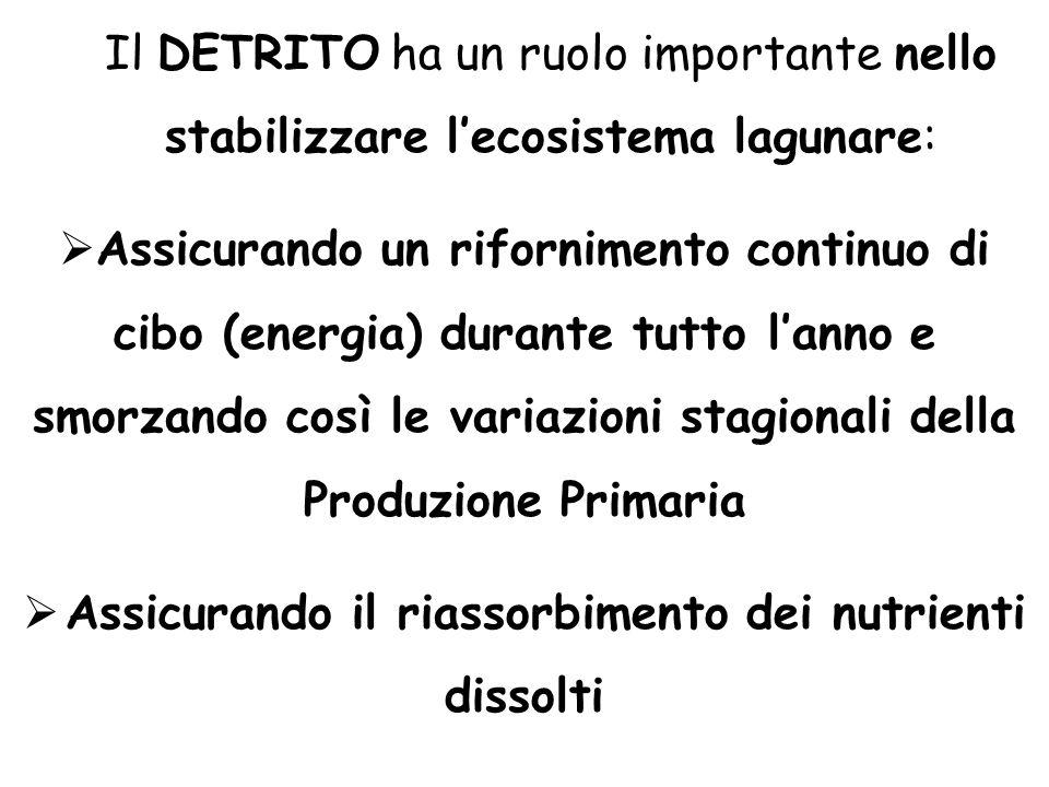 Il DETRITO ha un ruolo importante nello stabilizzare l'ecosistema lagunare:  Assicurando un rifornimento continuo di cibo (energia) durante tutto l'a