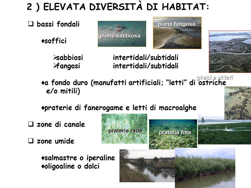 2 ) ELEVATA DIVERSITÀ DI HABITAT:  bassi fondali  soffici  sabbiosi intertidali/subtidali  fangosi intertidali/subtidali  a fondo duro (manufatti