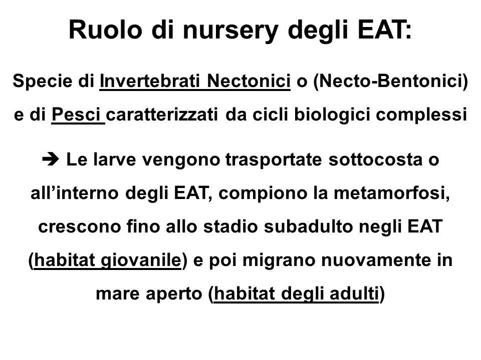 Ruolo di nursery degli EAT: Specie di Invertebrati Nectonici o (Necto-Bentonici) e di Pesci caratterizzati da cicli biologici complessi EAT, compiono