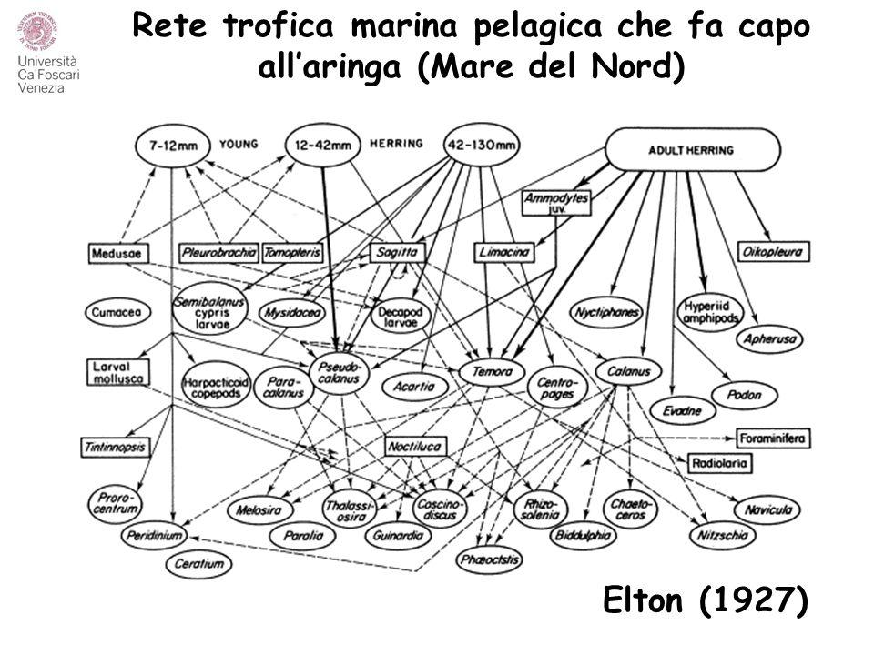 Rete trofica marina pelagica che fa capo all'aringa (Mare del Nord) Elton (1927)