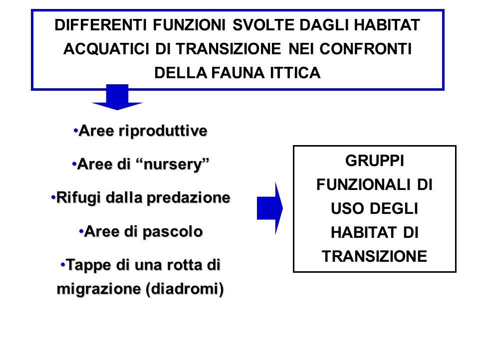 """DIFFERENTI FUNZIONI SVOLTE DAGLI HABITAT ACQUATICI DI TRANSIZIONE NEI CONFRONTI DELLA FAUNA ITTICA Aree riproduttiveAree riproduttive Aree di """"nursery"""