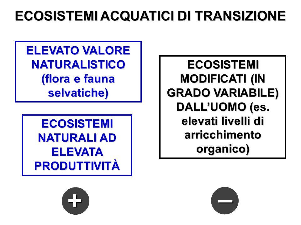 ELEVATO VALORE NATURALISTICO (flora e fauna selvatiche) ECOSISTEMI NATURALI AD ELEVATA PRODUTTIVITÀ ECOSISTEMI MODIFICATI (IN GRADO VARIABILE) DALL'UO