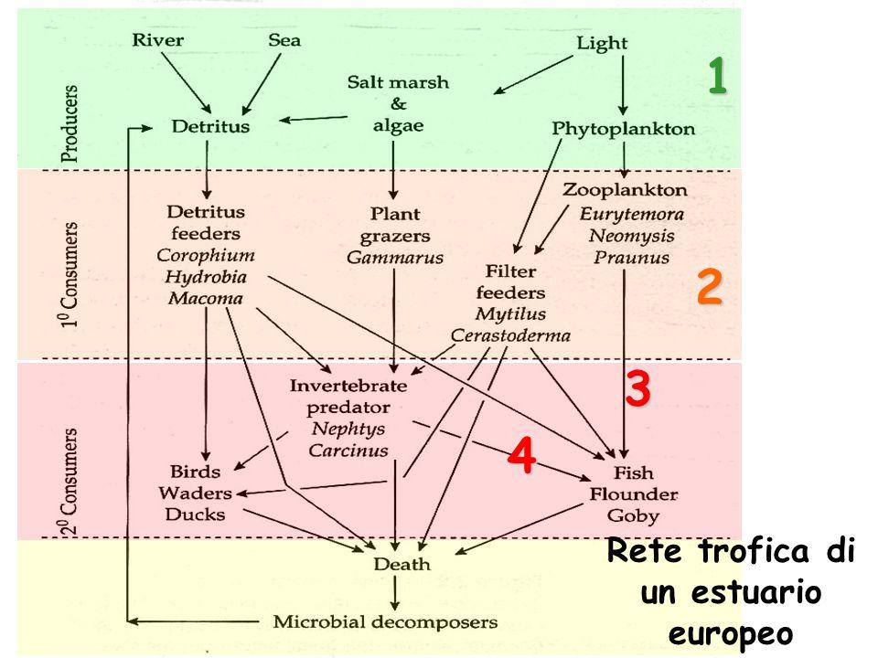  Caratterizzati da un'elevata produttività ecologica:  apporti di sostanza organica e di nutrienti (flussi mareali, flussi fluviali, ruscellamento e dilavamento suoli)  apporti di energia sussidiaria con le correnti di marea  diversità di produttori primari  ruolo del detrito