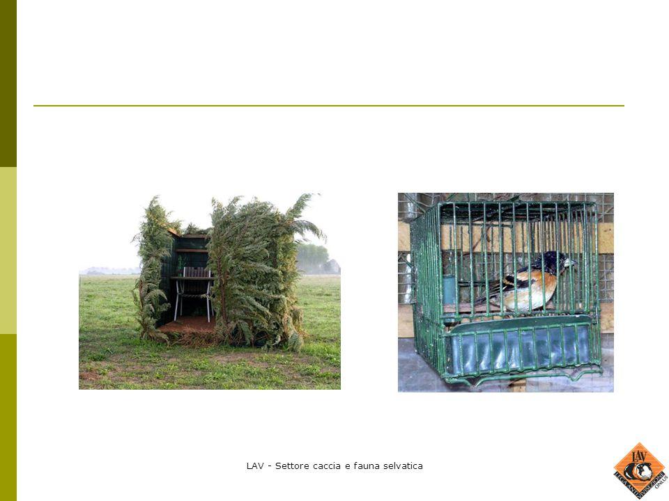 LAV - Settore caccia e fauna selvatica
