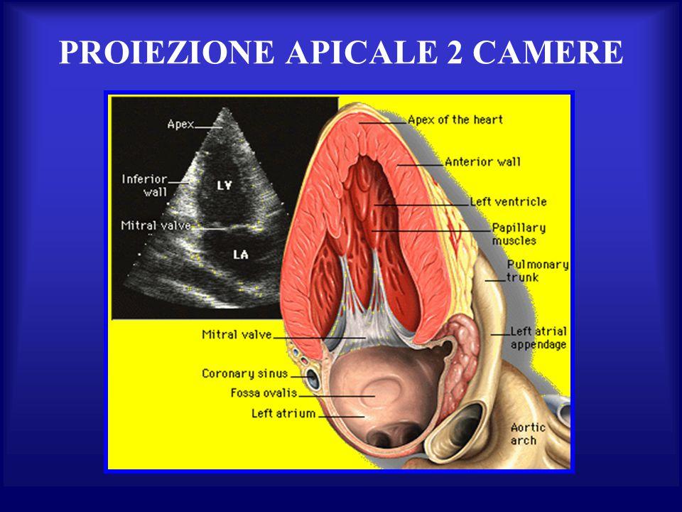 PROIEZIONE APICALE 2 CAMERE