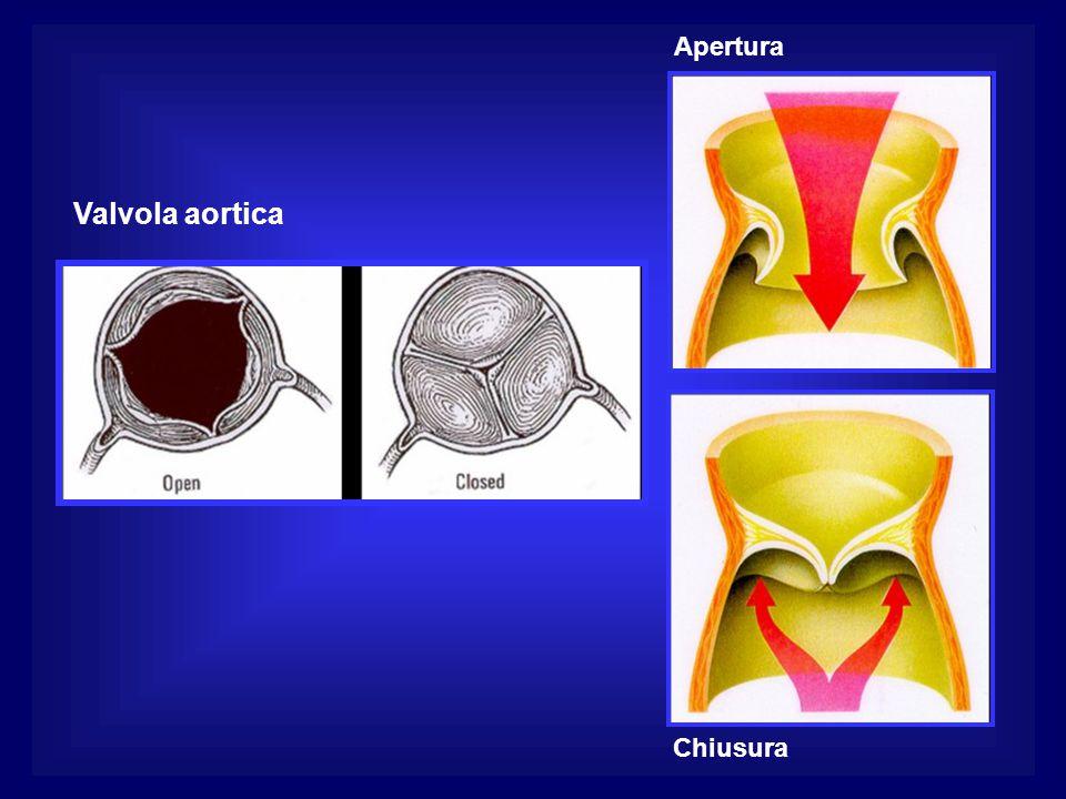 Valvola aortica Apertura Chiusura