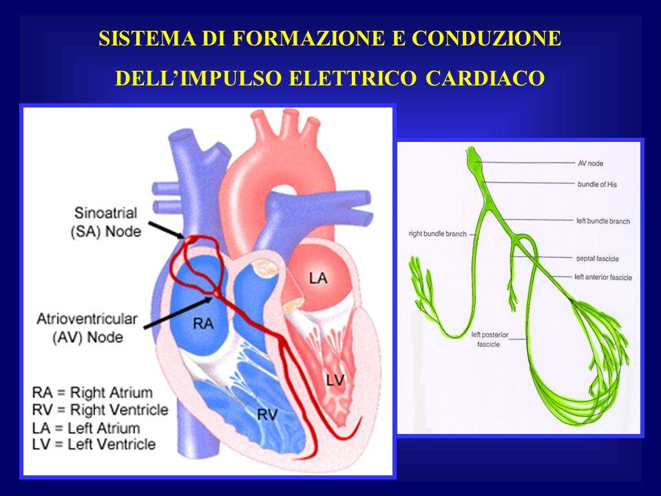 SISTEMA DI FORMAZIONE E CONDUZIONE DELL'IMPULSO ELETTRICO CARDIACO