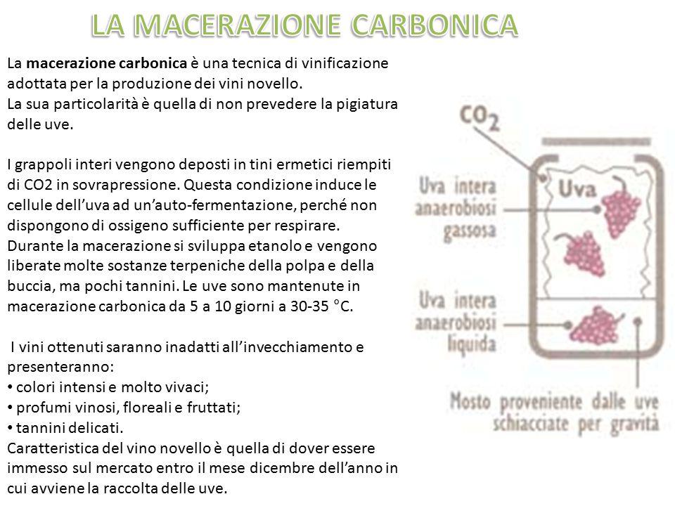 La macerazione carbonica è una tecnica di vinificazione adottata per la produzione dei vini novello. La sua particolarità è quella di non prevedere la
