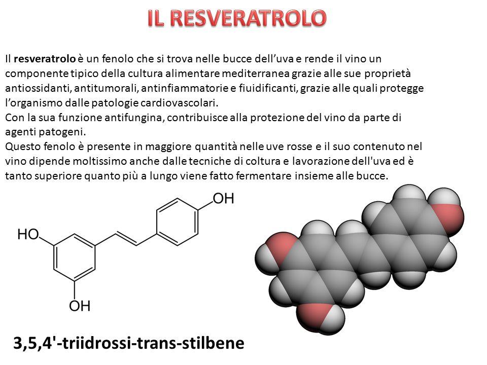 Il resveratrolo è un fenolo che si trova nelle bucce dell'uva e rende il vino un componente tipico della cultura alimentare mediterranea grazie alle s