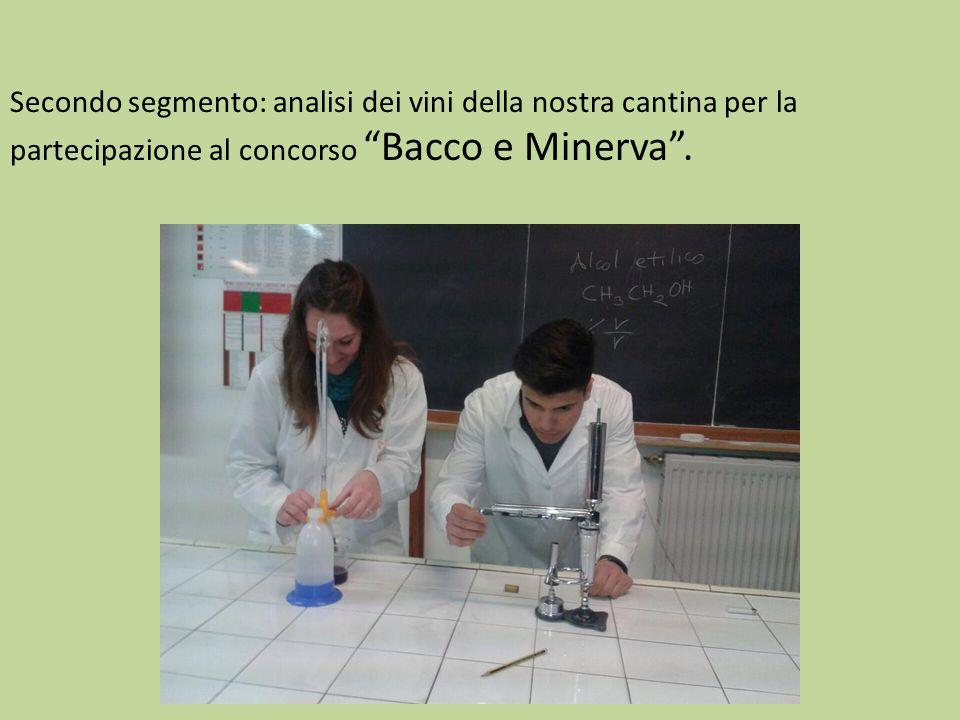 """Secondo segmento: analisi dei vini della nostra cantina per la partecipazione al concorso """"Bacco e Minerva""""."""