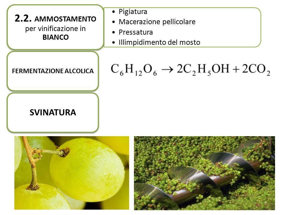 Pigiatura Macerazione pellicolare Pressatura Illimpidimento del mosto 2.2. AMMOSTAMENTO per vinificazione in BIANCO FERMENTAZIONE ALCOLICA SVINATURA