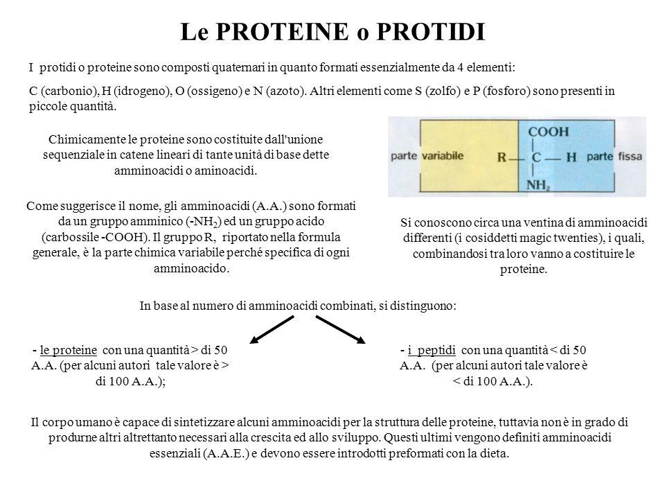 Le PROTEINE o PROTIDI ‑ i peptidi con una quantità < di 50 A.A. (per alcuni autori tale valore è < di 100 A.A.). Il corpo umano è capace di sintetizza