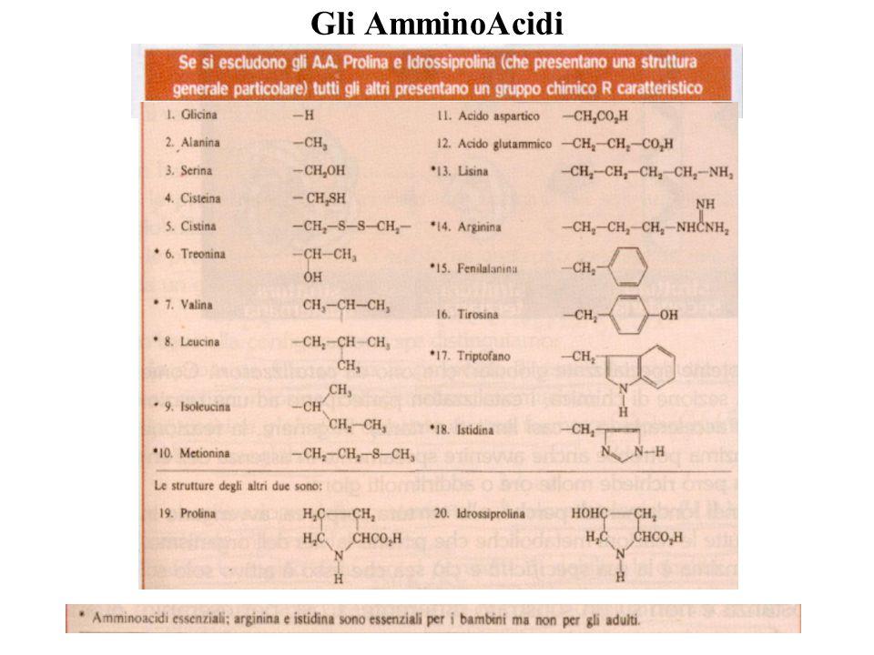 Livelli strutturali delle Proteine Gli amminoacidi sono tenuti insieme nelle molecole proteiche dal legame peptidico che.impegna il gruppo carbossilico ( ‑ COOH) di un A.A.