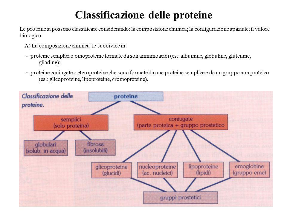 Classificazione delle proteine A) La composizione chimica le suddivide in: ‑ proteine semplici o omoproteine formate da soli amminoacidi (es.: albumin