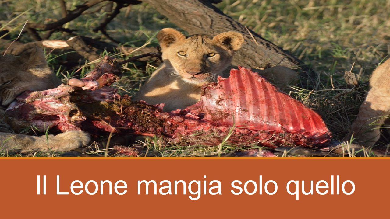 GRAZIE PER L'ATTENZIONE!! Rispettare la Natura per rispettare se stessi!!