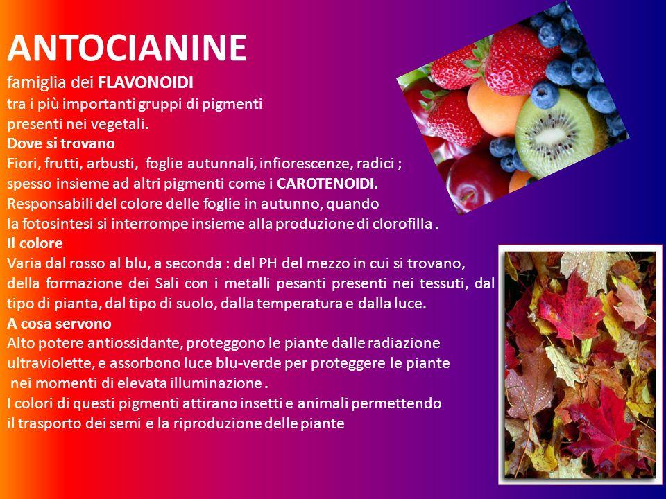 ANTOCIANINE famiglia dei FLAVONOIDI tra i più importanti gruppi di pigmenti presenti nei vegetali. Dove si trovano Fiori, frutti, arbusti, foglie autu