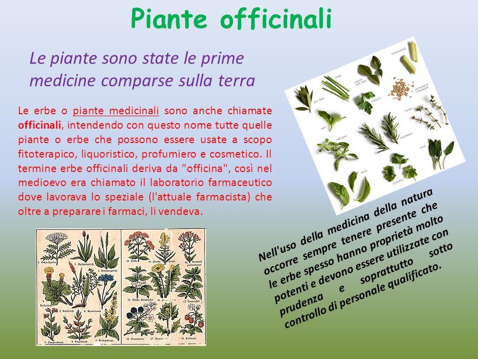 Le erbe o piante medicinali sono anche chiamate officinali, intendendo con questo nome tutte quelle piante o erbe che possono essere usate a scopo fit