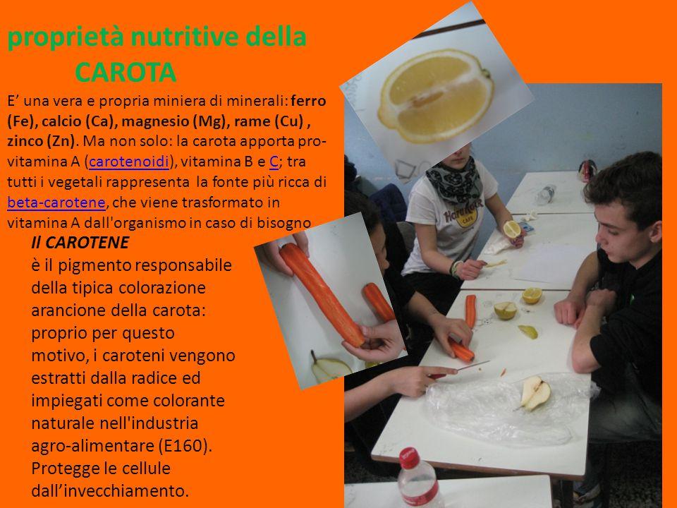 Il CAROTENE è il pigmento responsabile della tipica colorazione arancione della carota: proprio per questo motivo, i caroteni vengono estratti dalla r