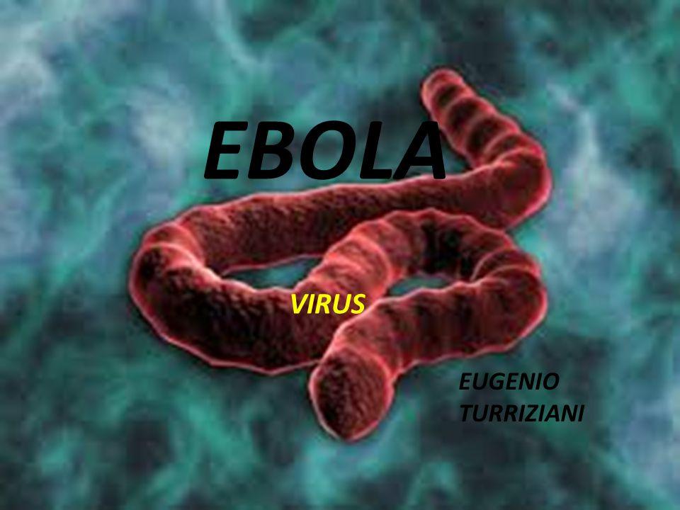 Il genere Ebolavirus è un raggruppamento di organismi che fanno parte della famiglia Filoviridae.