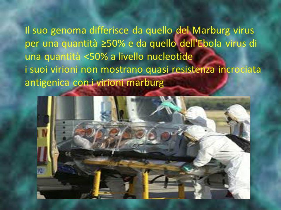 Il suo genoma differisce da quello del Marburg virus per una quantità ≥50% e da quello dell Ebola virus di una quantità <50% a livello nucleotide i suoi virioni non mostrano quasi resistenza incrociata antigenica con i virioni marburg