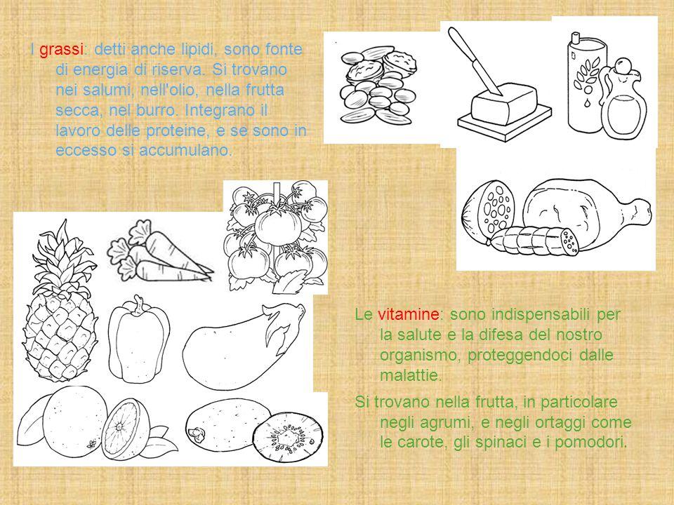 I grassi: detti anche lipidi, sono fonte di energia di riserva. Si trovano nei salumi, nell'olio, nella frutta secca, nel burro. Integrano il lavoro d