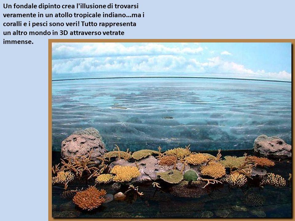 Un fondale dipinto crea l'illusione di trovarsi veramente in un atollo tropicale indiano...ma i coralli e i pesci sono veri! Tutto rappresenta un altr