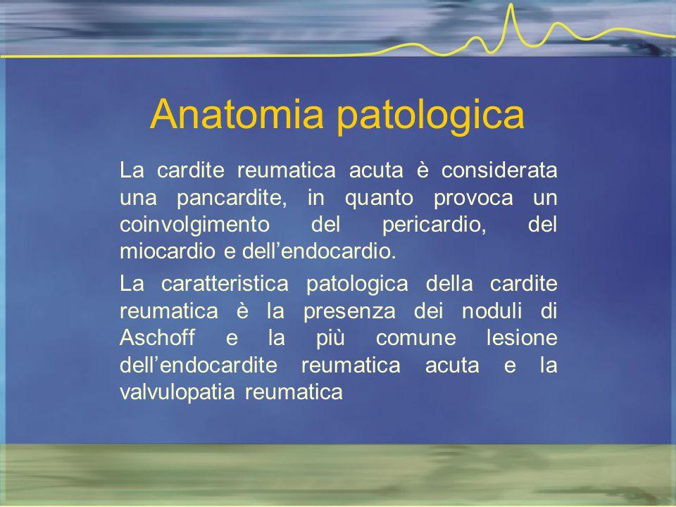 Anatomia patologica La cardite reumatica acuta è considerata una pancardite, in quanto provoca un coinvolgimento del pericardio, del miocardio e dell'