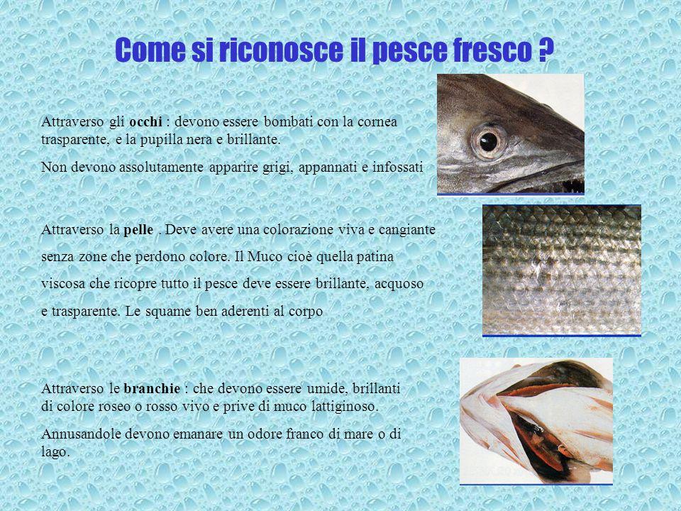 Come si riconosce il pesce fresco ? Attraverso gli occhi : devono essere bombati con la cornea trasparente, e la pupilla nera e brillante. Non devono
