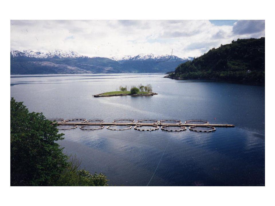 Allevamento di salmoni in un fiordo Norvegese