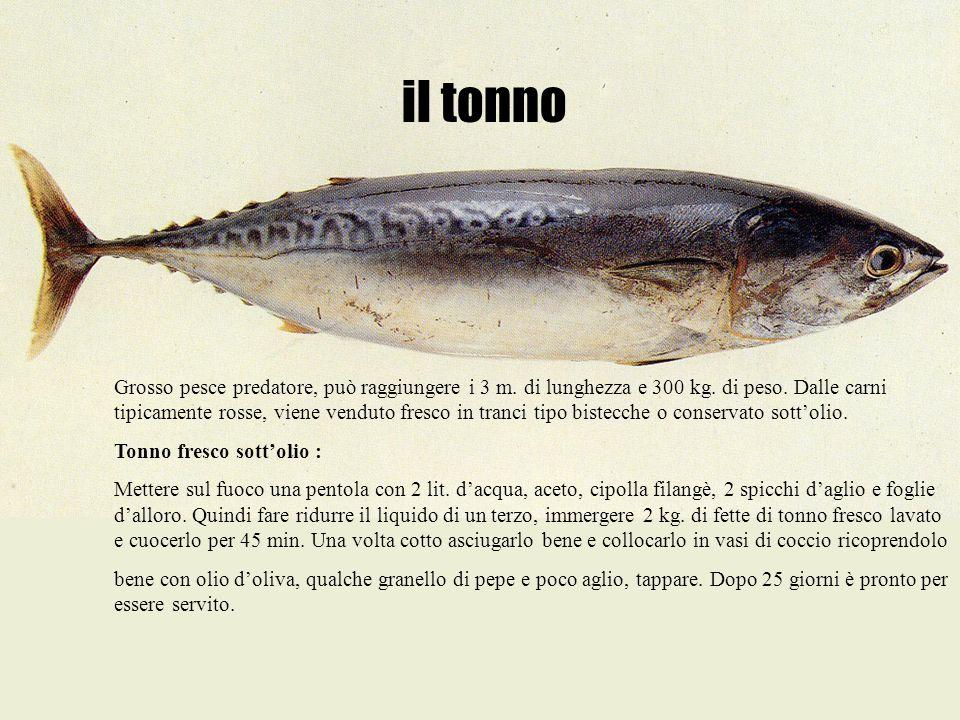 il tonno Grosso pesce predatore, può raggiungere i 3 m. di lunghezza e 300 kg. di peso. Dalle carni tipicamente rosse, viene venduto fresco in tranci