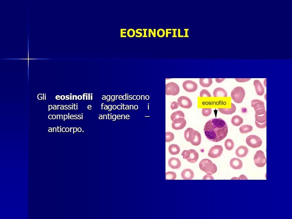 EOSINOFILI Gli eosinofili aggrediscono parassiti e fagocitano i complessi antigene – anticorpo.