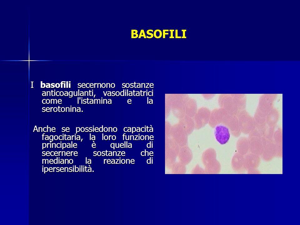 BASOFILI I basofili secernono sostanze anticoagulanti, vasodilatatrici come l'istamina e la serotonina. Anche se possiedono capacità fagocitaria, la l