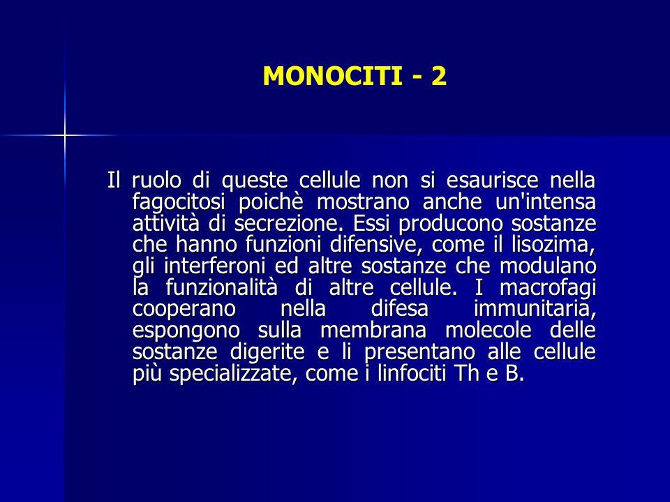 MONOCITI - 2 Il ruolo di queste cellule non si esaurisce nella fagocitosi poichè mostrano anche un'intensa attività di secrezione. Essi producono sost