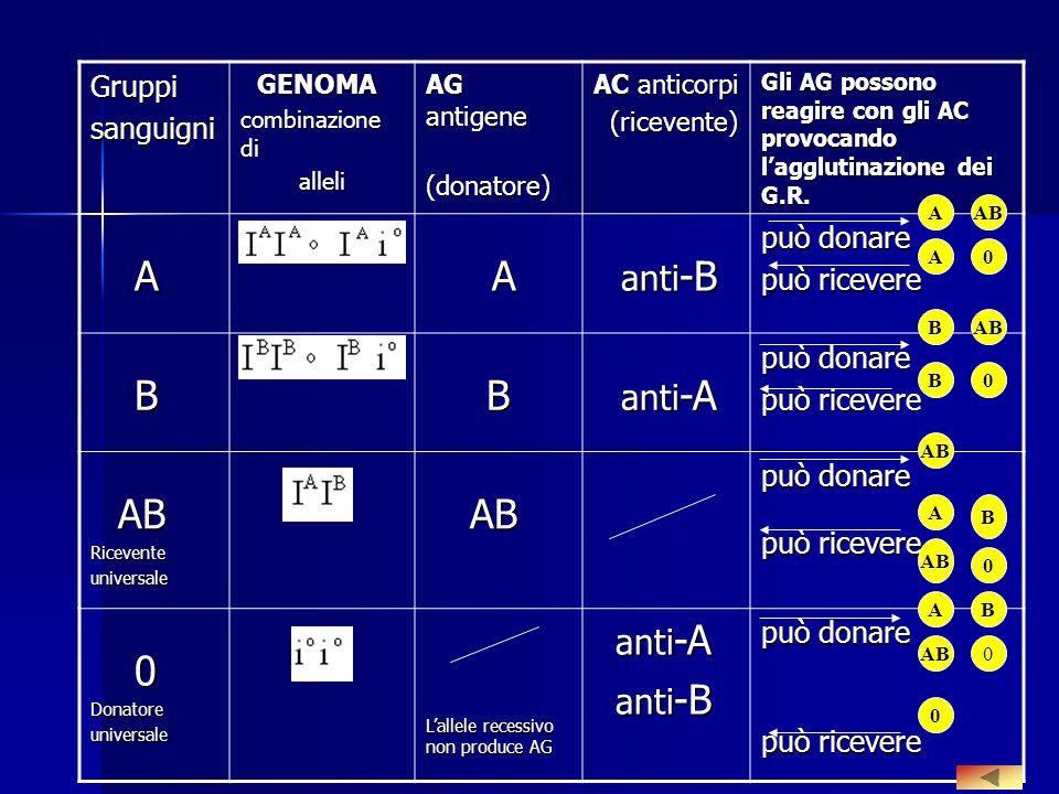 Gruppisanguigni GENOMA GENOMA combinazione di alleli alleli AG antigene (donatore) (donatore) AC anticorpi (ricevente) (ricevente) Gli AG possono reag