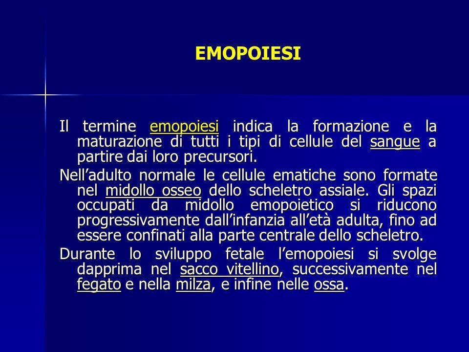 EMOPOIESI Il termine emopoiesi indica la formazione e la maturazione di tutti i tipi di cellule del sangue a partire dai loro precursori. sangue Nell'