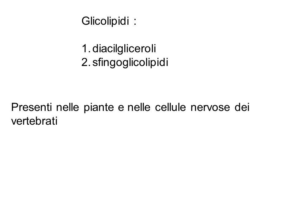 Glicolipidi : 1.diacilgliceroli 2.sfingoglicolipidi Presenti nelle piante e nelle cellule nervose dei vertebrati