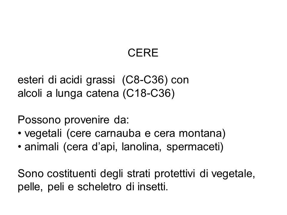 CERE esteri di acidi grassi (C8-C36) con alcoli a lunga catena (C18-C36) Possono provenire da: vegetali (cere carnauba e cera montana) animali (cera d