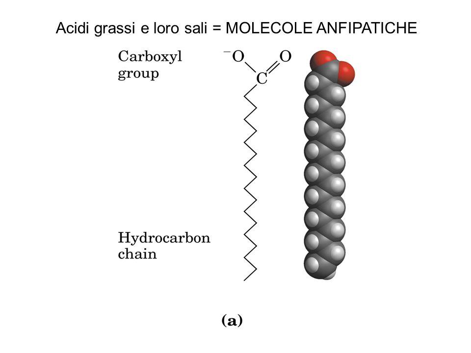 Colesterolo costituente che conferisce rigidità alle membrane biologiche, precursore di ormoni steroidei di acidi biliari.