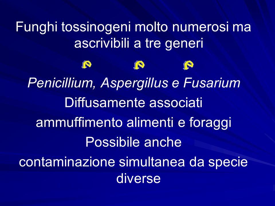 Funghi tossinogeni molto numerosi ma ascrivibili a tre generi Penicillium, Aspergillus e Fusarium Diffusamente associati ammuffimento alimenti e forag