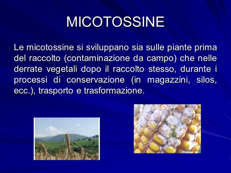 MICOTOSSINE Le micotossine si sviluppano sia sulle piante prima del raccolto (contaminazione da campo) che nelle derrate vegetali dopo il raccolto ste