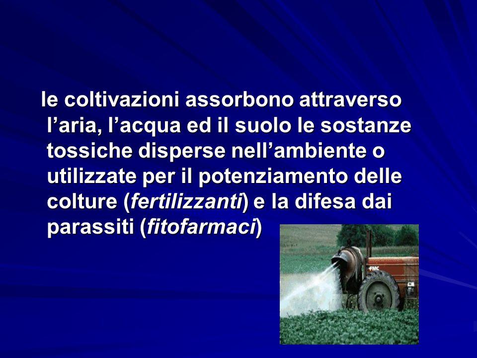 le coltivazioni assorbono attraverso l'aria, l'acqua ed il suolo le sostanze tossiche disperse nell'ambiente o utilizzate per il potenziamento delle c