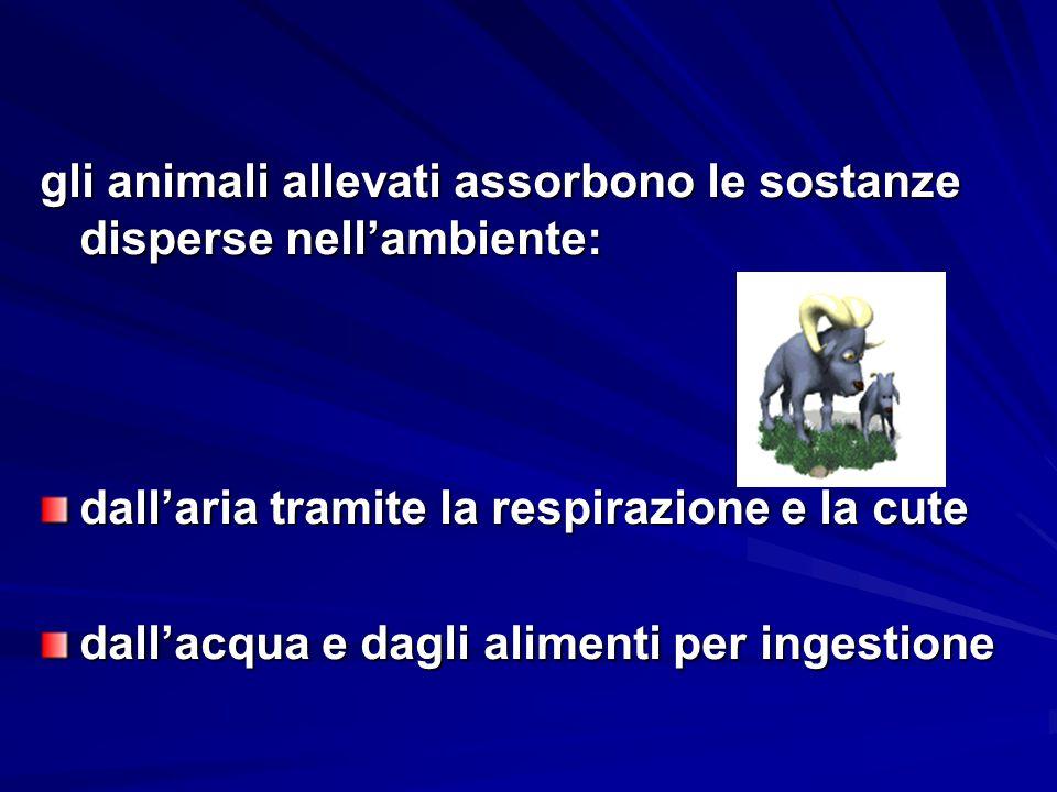 gli animali allevati assorbono le sostanze disperse nell'ambiente: dall'aria tramite la respirazione e la cute dall'acqua e dagli alimenti per ingesti