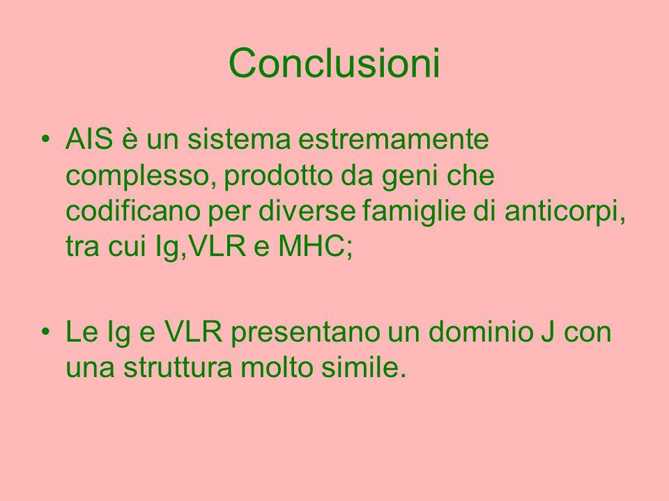 Conclusioni AIS è un sistema estremamente complesso, prodotto da geni che codificano per diverse famiglie di anticorpi, tra cui Ig,VLR e MHC; Le Ig e VLR presentano un dominio J con una struttura molto simile.