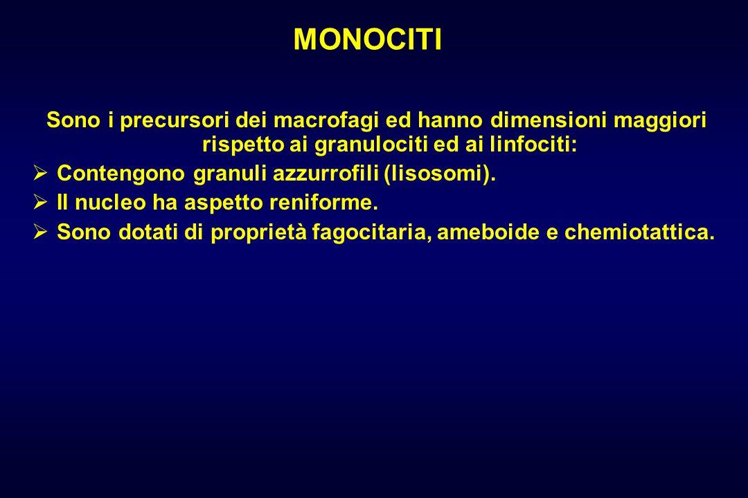 MONOCITI Sono i precursori dei macrofagi ed hanno dimensioni maggiori rispetto ai granulociti ed ai linfociti:  Contengono granuli azzurrofili (lisosomi).
