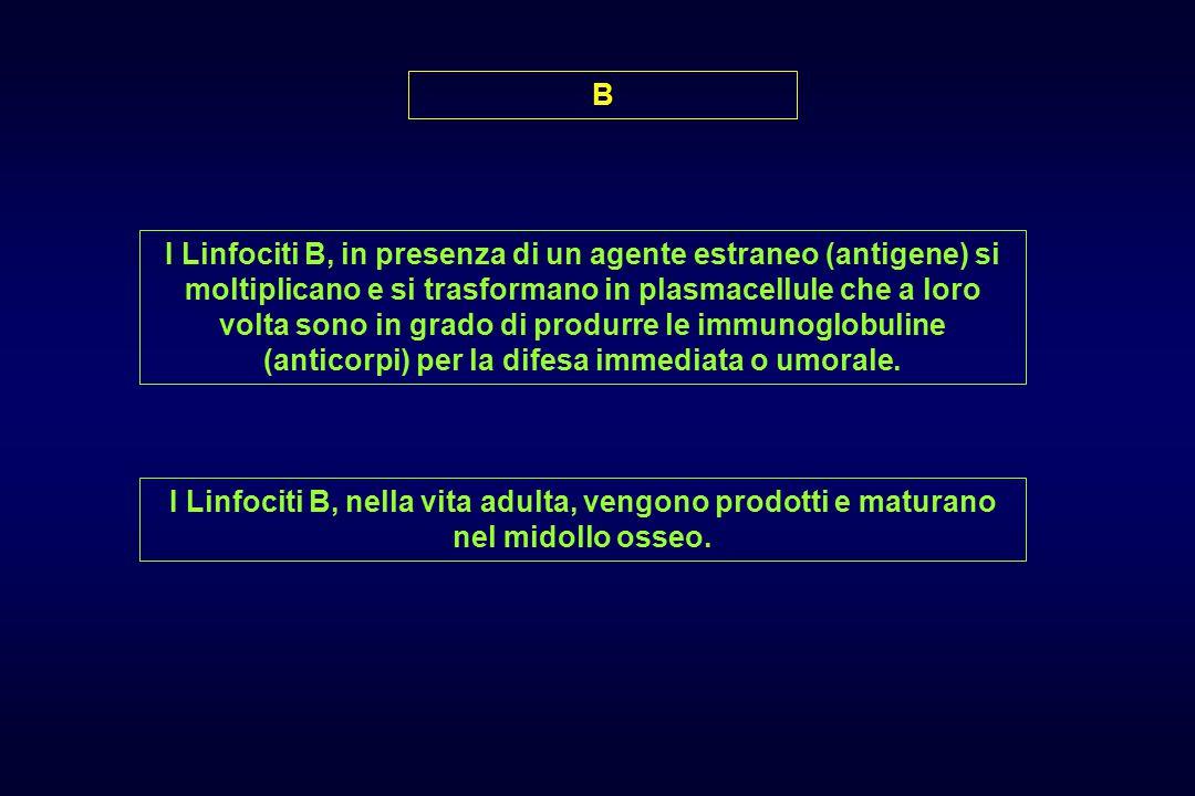 B I Linfociti B, in presenza di un agente estraneo (antigene) si moltiplicano e si trasformano in plasmacellule che a loro volta sono in grado di produrre le immunoglobuline (anticorpi) per la difesa immediata o umorale.