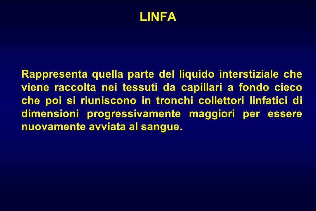 LINFA Rappresenta quella parte del liquido interstiziale che viene raccolta nei tessuti da capillari a fondo cieco che poi si riuniscono in tronchi collettori linfatici di dimensioni progressivamente maggiori per essere nuovamente avviata al sangue.