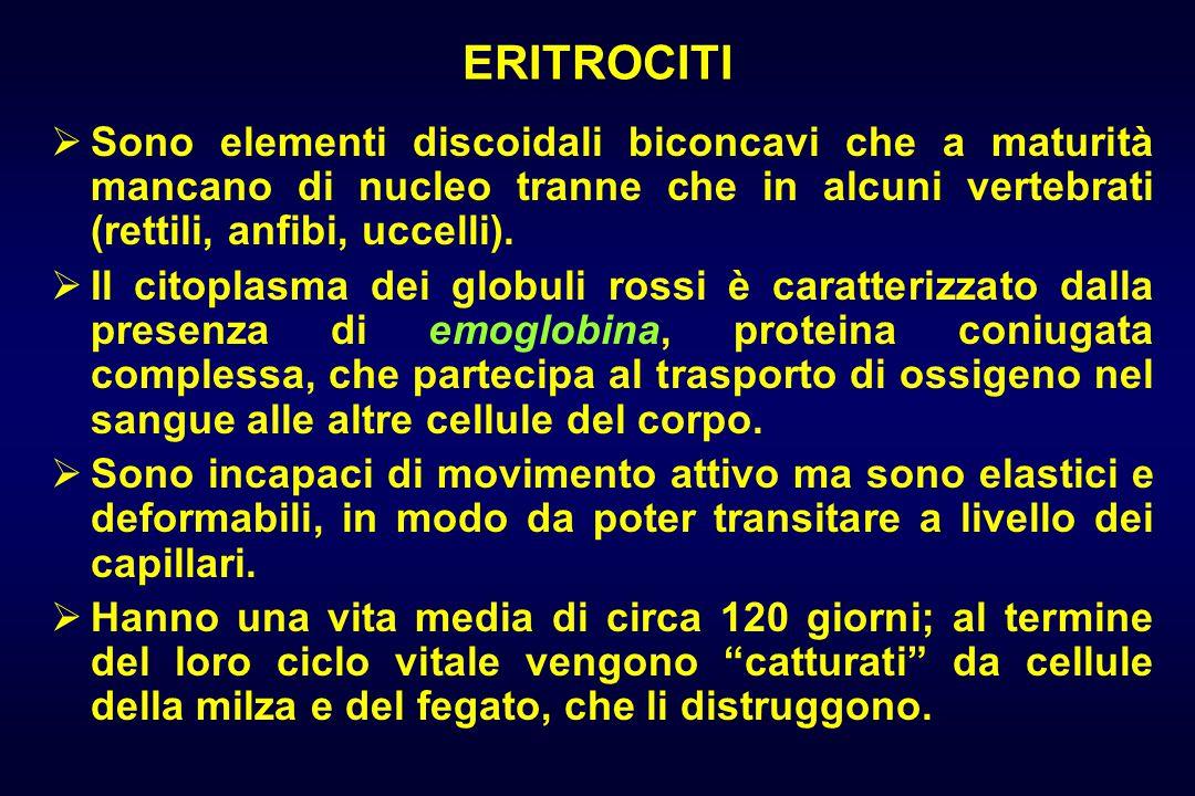 ERITROCITI  Sono elementi discoidali biconcavi che a maturità mancano di nucleo tranne che in alcuni vertebrati (rettili, anfibi, uccelli).