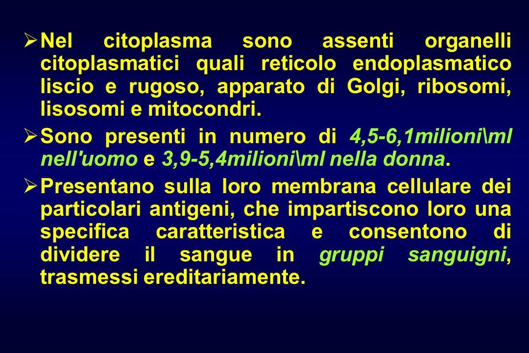  Nel citoplasma sono assenti organelli citoplasmatici quali reticolo endoplasmatico liscio e rugoso, apparato di Golgi, ribosomi, lisosomi e mitocondri.